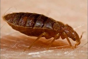 study-which-cities-have-the-most-bed-bugs
