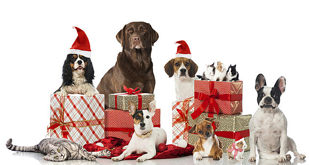 2015 Christmas Pet Photo Contest