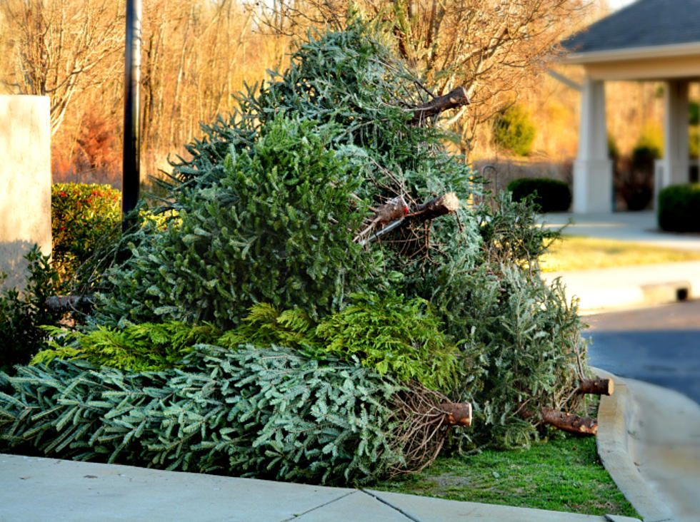 how to dispose of christmas trees in twin falls - What To Do With Old Christmas Trees